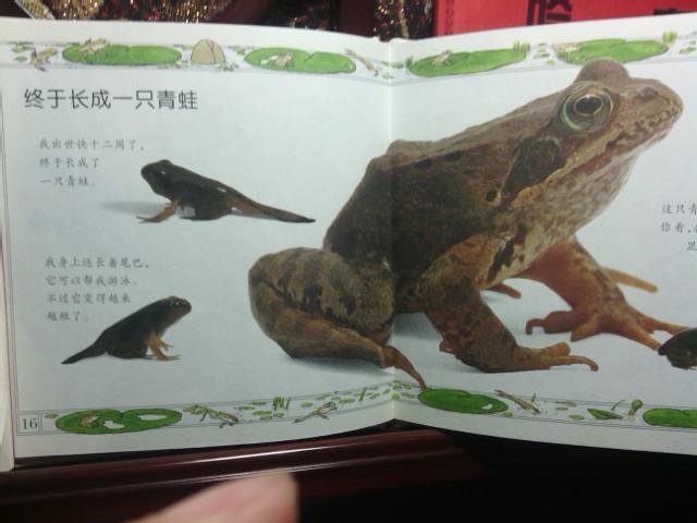 动物大家说的差不多了,一起看看需要冬眠的青蛙如何长大的吧